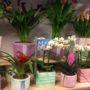 Ανθοπωλείο Ntalaperas: Τα ομορφότερα λουλούδια για τη γιορτή της Μητέρας